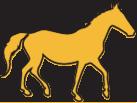 full_horse