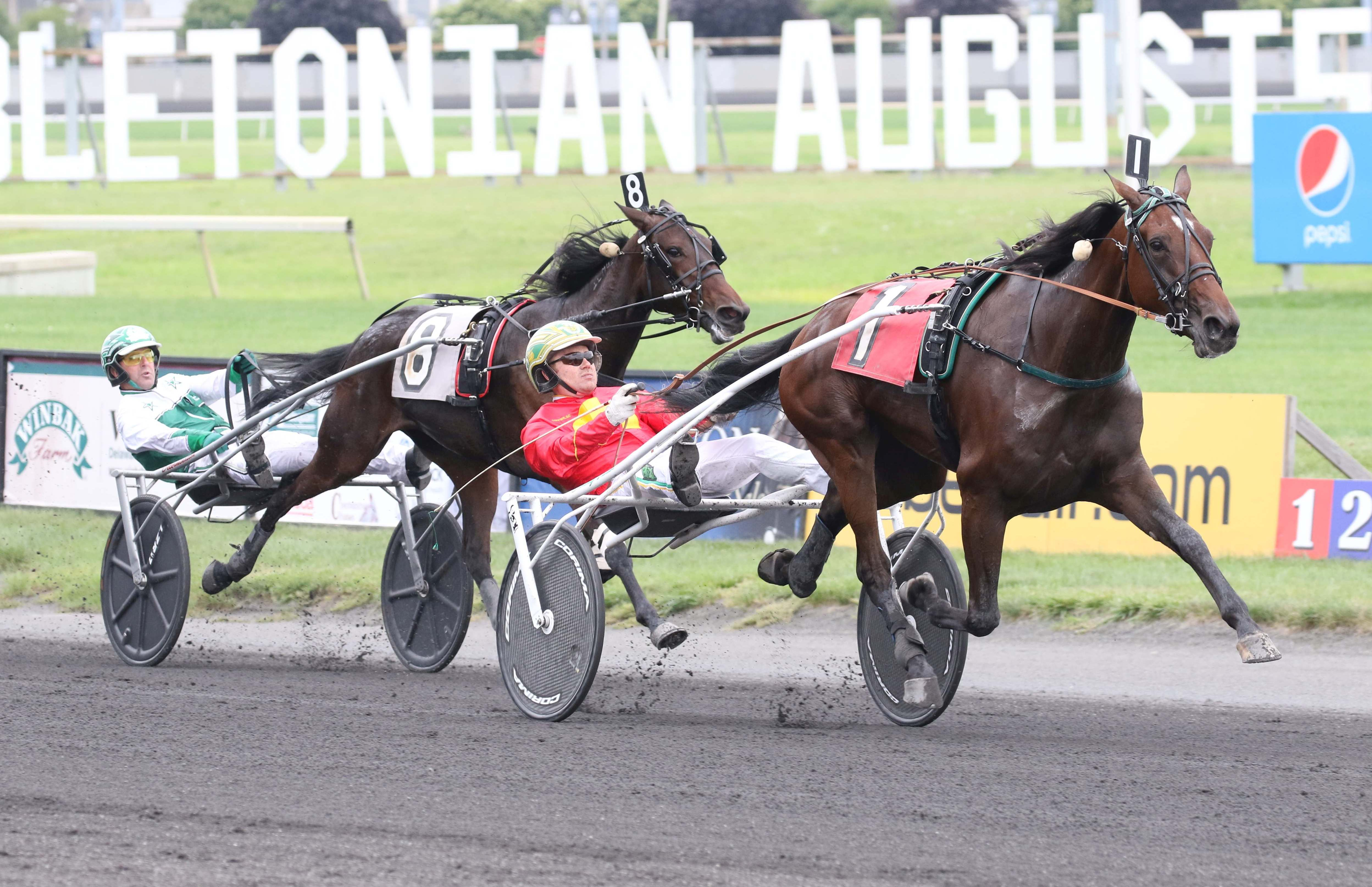 Pasithea Face to tackle the boys in Maple Leaf Trot - Harness Racing
